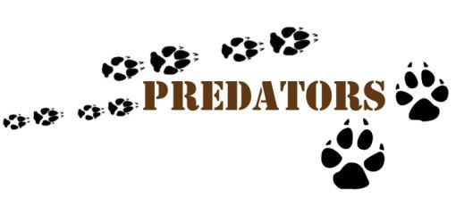 Christa's Luck predators wild horses