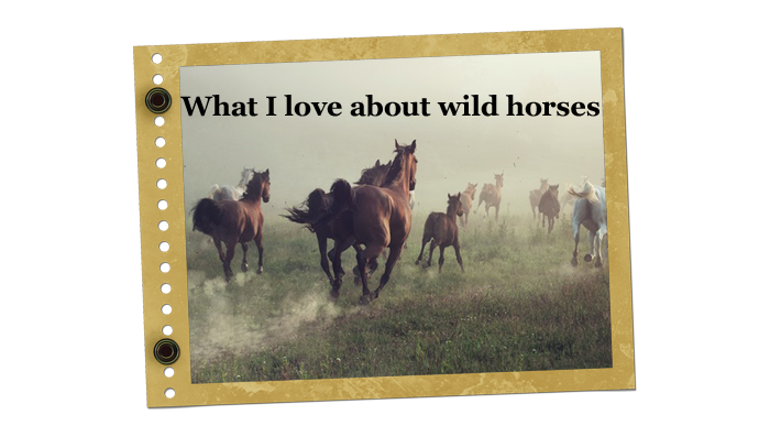 christa's luck wild horse blog mustangs adoption
