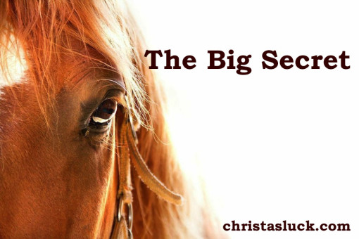 christas luck secret horses blog