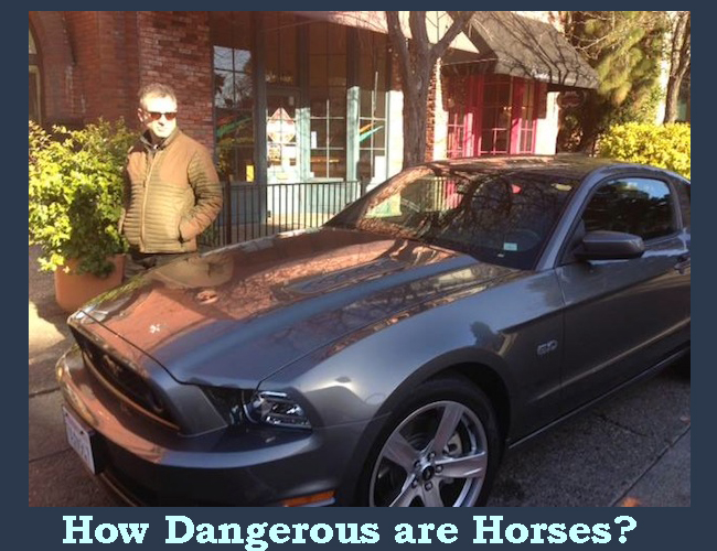 how dangerous are horses michael grais mustang GT christa's luck